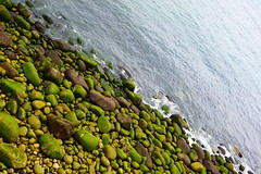 DSC05785 (Glasss Magic) Tags: greatbritain england green countryside cornwall unitedkingdom britain cornish coastpath travelphotography travelphoto