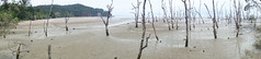 Rising waters panorama (quinet) Tags: panorama beach strand sarawak malaysia borneo plage kuching deadtrees 2015 bakonationalpark totebume arbresmorts