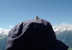 Gipfelbiene (brunoremix) Tags: sterreich alpen hohe pinzgau tauern bramberg kitzbheler