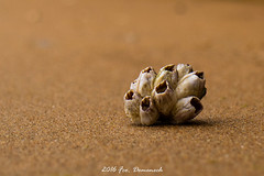 Playa de Cantabria. (Francisco Domenech) Tags: burgos cantabrico norte santander playa