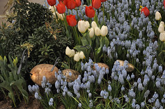 2016-03-11_0200n_netherlands (lblanchard) Tags: netherlands displaygarden 2016flowershow