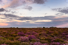 Dunwich Heath (Nick_Rowland) Tags: summer sky clouds evening coast suffolk heather heath dunwich eastcoast coastguardcottages