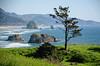 Timeless Overlook, Cannon Beach (tacoma290) Tags: park vacation tree beach beauty nikon mini crescent pacificnorthwest lone oregoncoast cannonbeach overlook pnw timeless ecola ecolastatepark timelessoverlookcannonbeach