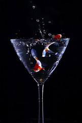 wet fish (marianna - Gasp bound) Tags: fish macro wet water glass drink martini splash hmm pouring mondays gulp splish mariannaarmata