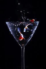 wet fish (marianna.armata) Tags: fish macro wet water glass drink martini splash h