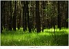 Een lariks in het bos (5D053268) (nandOOnline) Tags: licht bomen nederland natuur boom bos landschap zonlicht rips lariks compositie nbrabant stippelberg