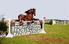 Reitturnier, brav , 67-6 (roba66 (Thx for 20 Mill. views)) Tags: horse caballo cheval reiter pferd turnier trabalho chevaux reitturnier roba66