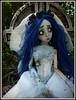 P1050498 (TwilightSoulDolls by Belin) Tags: dark bride emily dolls tales bjd corpse mayfair custo