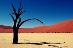 Sossusvlei Dead Vlei Namibia Namib desert (Globe-Trotting.com) Tags: voyage travel southafrica dead photo desert namibia sossusvlei namib deadvlei vlei namibie globetrotting