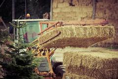 (198/366) Stacks. (Cathy G) Tags: odiham farm raddik home hampshire canon canon40d canon28135mm 366 198366 hay bales stack farming