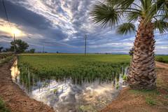 Arros tropical (christian&alicia) Tags: landscape nikon sigma delta natura catalonia catalunya 18200 hdr arros paisatge ebre catalogne d90 christianalicia