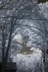 IMG_2387 (Dan Correia) Tags: belchertown clouds barn infrared canonef50mmf14usm 15fav topv111 topv333 topv555 topv777 topv999 510fav topv1111