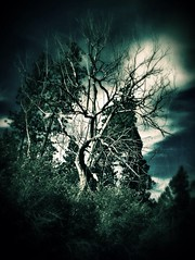 Requiem for a Tree. (JediMomTricks) Tags: trees nature dark death branches ambient colfax albumcovers palouse deadtrees blackmetal easternwashington femalephotographers artofnature iphoneography comboapps appography snapseed instacanvas uploaded:by=flickrmobile flickriosapp:filter=nofilter jedimomtricks