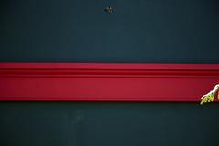 Passando! (Rubens.Campos) Tags: verde brasília azul brasil canon df cam rosa vermelho anil vermelha folha camara iesb faixa asasul t4i rubenscampos