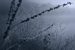 Pearls on the Strand (maryanne.pfitz) Tags: stilllife plants mist lake nature water fog wisconsin landscape weeds shoreline spiderweb dew lakealice tomahawk lincolncounty maryannepfitzinger map8778