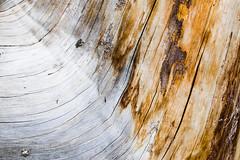 wood (qitsuk) Tags: wood macro forest pany