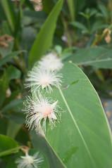 ... (Bryan Shan@) Tags: flower m42 fujinon ebc 2835 a55 fujiphotofilmcoebcfujinon135f28mm