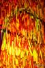 """Exposição """"(ARTE e MODA) - Salvage"""" – O Requinte do Resto (Wilson Rodrigues / Fotógrafo - Santo André-SP) Tags: baby arte moda sé caixa obra cultural steinberg autoral exposição tecido tecidos materiais registro reciclados fotografar recuperados"""