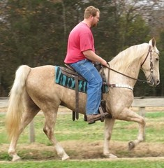 One of a Kind Palamino TWH, Trail Horse With Canter (brflatshod) Tags: show ranch horses horse animal animals walking athletic jumping tennessee barrel champion tags trail cutting finished endurance flashy trailriding roping palomino gymkhana ranchwork trained gelding eventing barrelracing reining allaround gaited teampenning workingcow flaxenmane riddenwestern trailclasscompetition moneywinner showexperience workingcattle reinedcow equinenow:user=64351 geo:lat=35483406 geo:lon=864602717