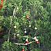 Trees_of_Loop_360_2013_026
