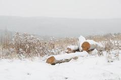 DSC_0305_2 (Putneypics) Tags: winter snow landscape vermont farm putney putneypics