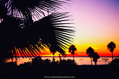 Santa Monica, CA (Valentina Balashova) Tags: california light sunset canon santamonica palmtree inthedark 5dmarkii