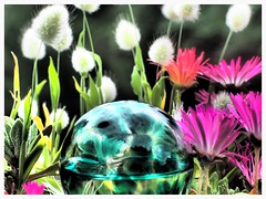 Flower Power (Plastik99) Tags: flower dramatic olympus omdem5 vision:outdoor=063 vision:plant=0795