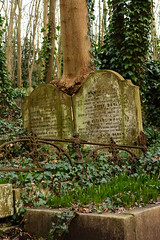 highgate 6 (photokev2701) Tags: tree graveyard statues graves angels tombs