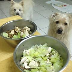 高麗菜+雞胸肉 #dogfood #dog #doglife #doglove #dogdaily #dogstagram #instadog #熊寶 #阿河