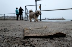 bookdog (Troyka The Gallery) Tags: abandoned wet found lost book cornwall stives