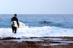 taking turns (sunphlo) Tags: coast midwest dolphin surfer wave surfing westernaustralia kalbarri
