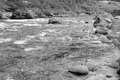 DSCF4430 (T Kato) Tags: japan river fujifilm minami gifu xf1855mmf284