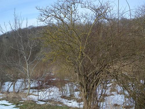 20150219_86_Wienerwaldsee (Large)