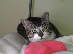 cats cat virginia feline help animalrescue donation felines february animalsanctuary donations helping donate animalrefuge rapidan 22015 rikkisrefuge helpinganimals johnkitty february2015 february202015