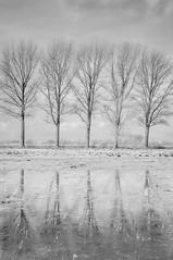 (crosslens) Tags: trees winter landscape ir infrared