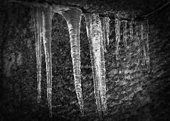 Frozen (Paul Wynn Photography) Tags: blackandwhite ice frozen freezing frozenwater icepatterns