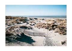 Le Touquet (thomaschauvin) Tags: leica landscape dune m8 pasdecalais touquet