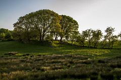 Derryboye tree ring (dareangel_2000) Tags: trees nature rural landscape countryside spring farm country farming northernireland countrylife musictomyeyes crossgar 2016 codown killyleagh saintfield 123nature raffery derryboye dariacasement derryboy derryboyetownland