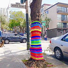 Hug a Tree (jerimiah1martinez) Tags: trees tree apple colors wow cool nice colours time crochet sew hobby dressing treetrunk talent bayarea coloring trunk effort material how neat huh somewhere fuscia truecolors hugatree ipodtouch