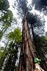 IMG_3577.jpg (edcool1_1) Tags: yotsuba yotsubato revoltech yotsubayosemite よつば よつばと よつば& リボルテック よつばとヨセミテ国立公園 よつばとヨセミテ よつば&ヨセミテ国立公園 よつば&ヨセミテ neldergrove shadowofthegiants sequoia redwood giantredwoods forest trees