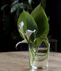 Flowers from my yard (s.jean.c) Tags: flowers green floral leaves calla lilies arrangement