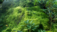 Indischer Dschungel (shutter2005) Tags: selva jungle indien moos dschungel djungel jungel orman oerwoud shutter2005 giungla dungla  viidakko dzsungel dungle    frumskgur