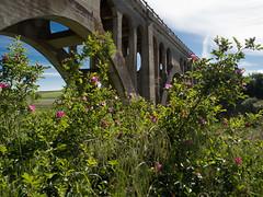 Still public and still standing (wsumgdriver) Tags: bridge iso200 washington trail rosalia milwaukeeroad johnwaynetrail olympusem5 olympusm1240mmf28