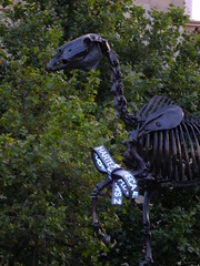 Gift Horse (failing_angel) Tags: london westminster trafalgarsquare skeletal equestrianstatue hanshaacke cityofwestminster riderlesshorse gifthorse fourthplinth williamiv 170716