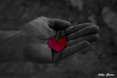 Con el corazn en la mano (Jotha Garcia) Tags: red blancoynegro blanco blackwhite rojo hand heart y bokeh negro mano corazn nikond3200 zomming jothagarcia sorayalalolailo