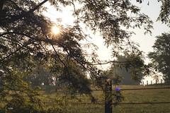 Respiration de soleil .. (LucieLune) Tags: trees sky cloud sun paris nature soleil champs ciel nuage campagne arbre herbe pr