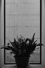 Untitltled (Matthewpath) Tags: light summer portrait people blackandwhite black photography lol thing colores minimal metaphysics metaphysic yphoto lightphotography summer2016 nikonnikonphotography nikond7100 summer2k16 summertbtminem