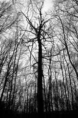 Web (Adi Berger Photo) Tags: blackandwhite bw forest dark scary creepy panasonicfz1000