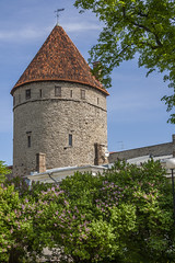Medieval Tower In Tallinn (AudioClassic) Tags: old city tree tower wall skyline town spring europe tallinn estonia day cityscape fort steeple financialdistrict weapon destination easterneurope northerneurope urbanscene capitalcities buildingexterior balticcountries surroundingwall europeanculture
