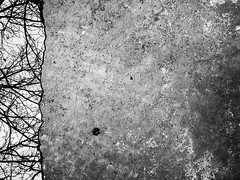 To the Left.... (Rossdxvx) Tags: trees abstract tree art texture nature silhouette contrast outdoors woods noir shadows outdoor michigan metallic surrealism lofi surreal overlay gritty textures overexposed minimalism textured 2016